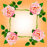 Painting art watercolor flower illustration pink color of rose Stock Image