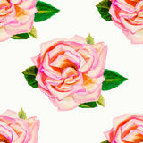 Painting art watercolor flower illustration pink color of rose Royalty Free Stock Images