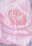 Painting art watercolor flower illustration  pink color of rose. Stock Photo