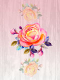 Painting art watercolor flower illustration pink color of rose Royalty Free Stock Photos
