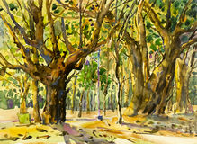 Painting art watercolor landscape original  colorful of tree garden. And emotion in green leaves  background Royalty Free Stock Photo