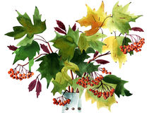 Painting autumn leaves Royalty Free Stock Photos