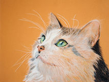 Painting of a Beautiful Cat Stock Image