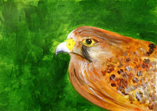 Painting of a beautiful Falcon Stock Photography