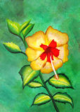 Painting of a beautiful yellow and red hibiscus Stock Image