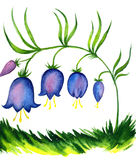 Painting of bell flowers Royalty Free Stock Photo