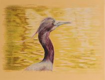 Painting of blue heron bird. Very detailed artwork of a heron by the water painted with color pencils.  Beautiful as greeting cards Royalty Free Stock Photos
