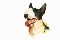 Painting of Bull Terrier. On white Royalty Free Stock Image