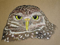 Painting of a Burrowing Owl Stock Image