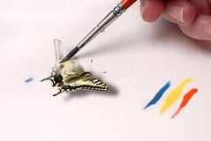 Painting a butterfly. Painting a swallowtail butterfly to life royalty free stock photos