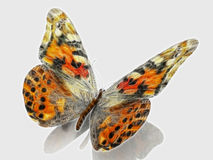 The painting butterfly Stock Images