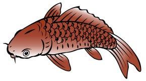 Painting of carp fish. On white background Stock Image