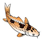 Painting of carp fish. On white background Stock Images