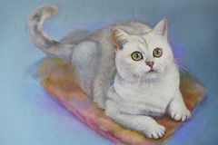 Painting cat british shorthair stock image