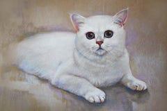 Painting cat british shorthair stock photos