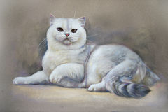 Painting cat british shorthair Royalty Free Stock Photos