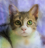 Painting of cat face.oil painting Royalty Free Stock Image