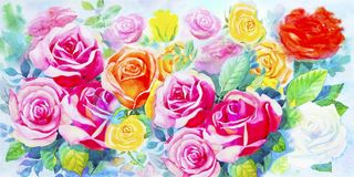 Painting  colorful bunch of roses in the garden. Illustration painted spring flowers colorful bunch of roses in the garden and emotion in realistic,pink rose Royalty Free Stock Photo