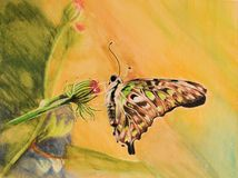 Painting of colorful butterfly Stock Photography
