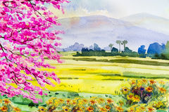 Painting colorful of flowers and rice field in the morning. Watercolor landscape original painting on paper colorful of flowers and rice field in the morning Stock Photos