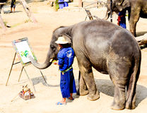 Painting colorful on white board by Elephant. Stock Photos