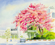 Painting colorful of wild himalayan cherry in cmu.univesity Royalty Free Stock Image