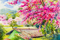 Painting colorful of wild himalayan cherry in mountain Royalty Free Stock Images