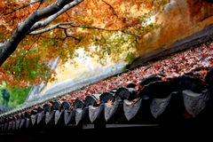 Painting colour autumn. In an ancient chinese temple,I went to the back yard and took this photo. Like an oil painting,I like the colour very much Royalty Free Stock Images