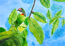 Painting of a Coppersmith Barbet, a child art Royalty Free Stock Photos