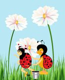 Painting dots on the ladybug Royalty Free Stock Images