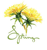 Painting, drawing - air dandelions Stock Images