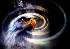 Painting  eagle and  feathers on an abstract background , USA Symbolpainting  eagle on an abstract background, USA Symbols Freedom Royalty Free Stock Image
