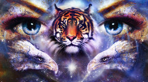 Painting eagles and tiger with woman eyes on Royalty Free Stock Photography