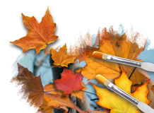Painting Fall Season Leaves on White. An artist is painting colorful fall leaves on a white background canvas with paint brushes. One leaf is popping out. Can Stock Photography
