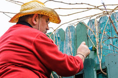 Painting fence in garden Stock Photos