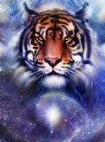 Painting fire tiger on color space background, wildlife animals Royalty Free Stock Photo