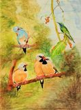 Painting of five birds perched on tree branches. Very detailed artwork of birds including one Red-cheeked Cordon-bleu, one hummingbird and three Long-tailed Stock Photo