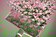 Painting flowers. Pattern of pink tulips painted with roller on the wall Royalty Free Stock Photo