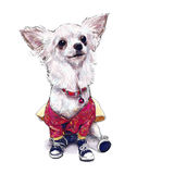 Painting illustration of pomeranian dog,wearing clothes and shoe Royalty Free Stock Photo