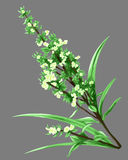 Painting isolate still life flower white green Royalty Free Stock Photo