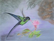 Painting of Jamaican Streamertail hummingbird Royalty Free Stock Photo