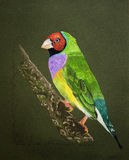 Painting of a Lady Gouldian Bird. Very detailed artwork of a beautiful Lady Gouldian bird painted with color pencils Stock Photo