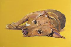 Painting laying cross-breed dog stock images
