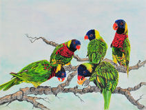 Painting of Lorikeets Stock Photography