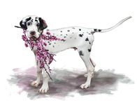 Painting of a lovely Great Dane dog holding flowery cherry branches. A  Great Dane dog holding flowery cherry branches in its mouth Stock Image
