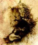 Painting of mighty flying eagle and tiger. on abstract background, sepia effect. Stock Photography