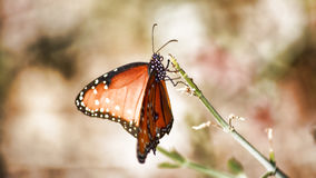 Painting With Nature. A butterfly taking its time painting with his favorite pastels Royalty Free Stock Images