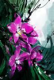 Painting Orchid purple on the trees in the garden - Stock Image Royalty Free Stock Images