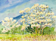 Painting original landscape of wild himalayan cherry tree flowers Stock Photo