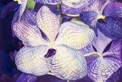 Painting original realistic purple,blue color of orchid flowers. Watercolor flowers painting original realistic purple,blue color of orchid flowers vector illustration